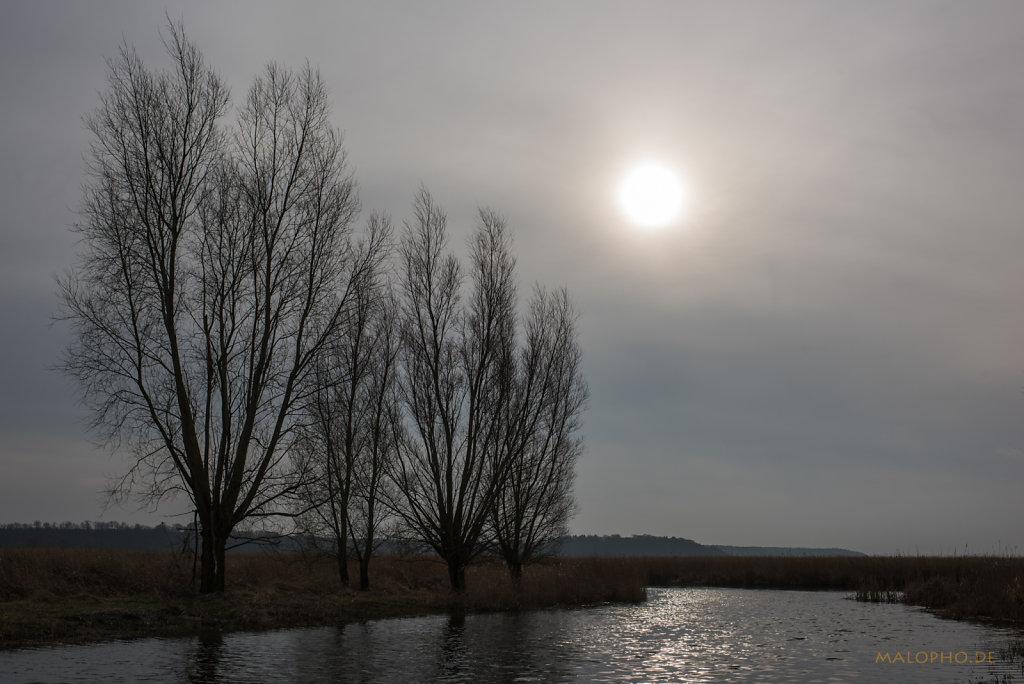 Kanalbäume-1