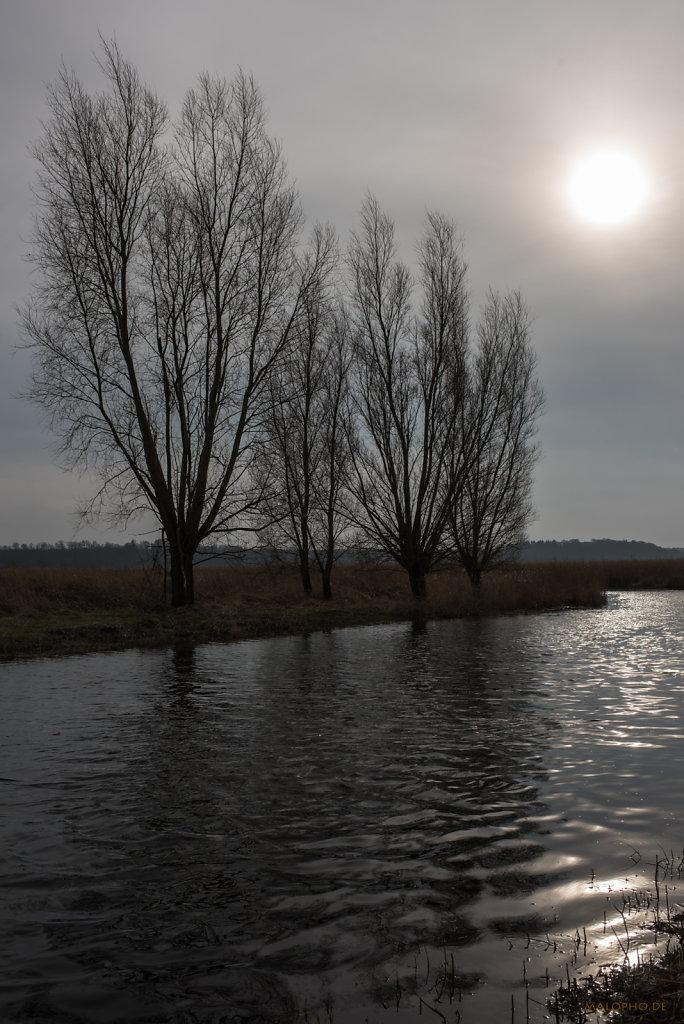Kanalbäume-2