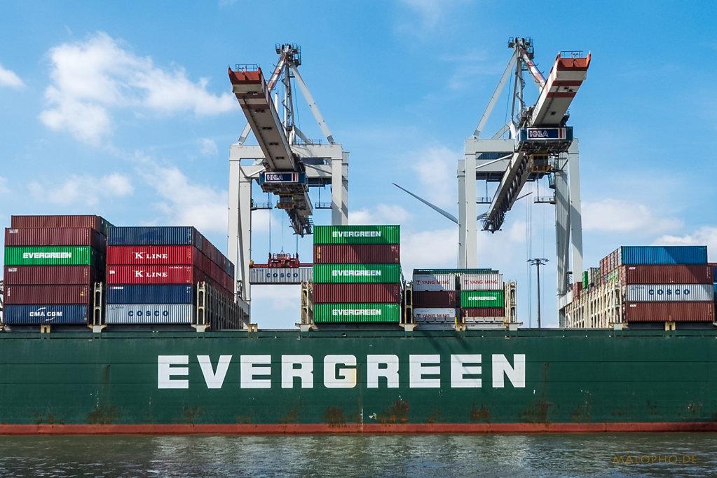 Evergreen-2