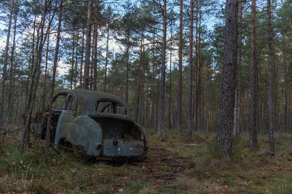 Alleine im Wald