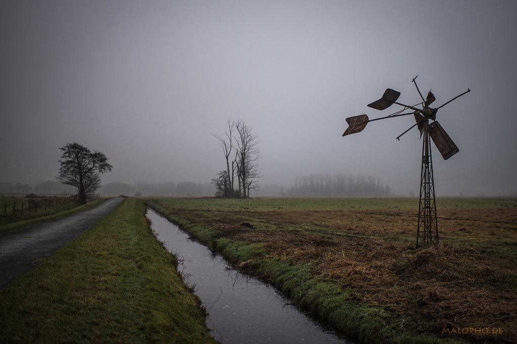 Nebelwiesen 2016