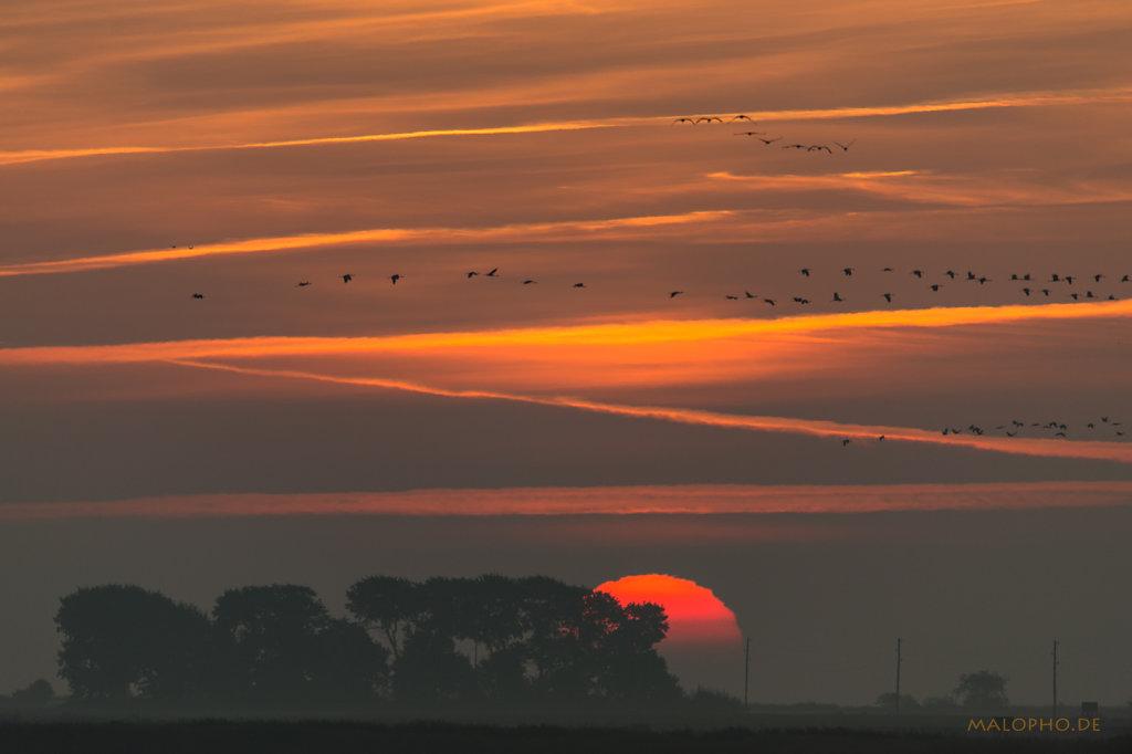 Kranich Sonnenaufgang-2