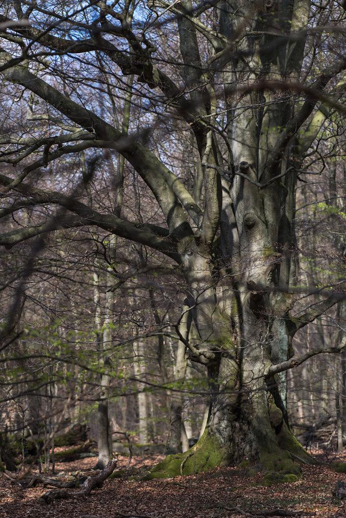 Wo ist der Baum