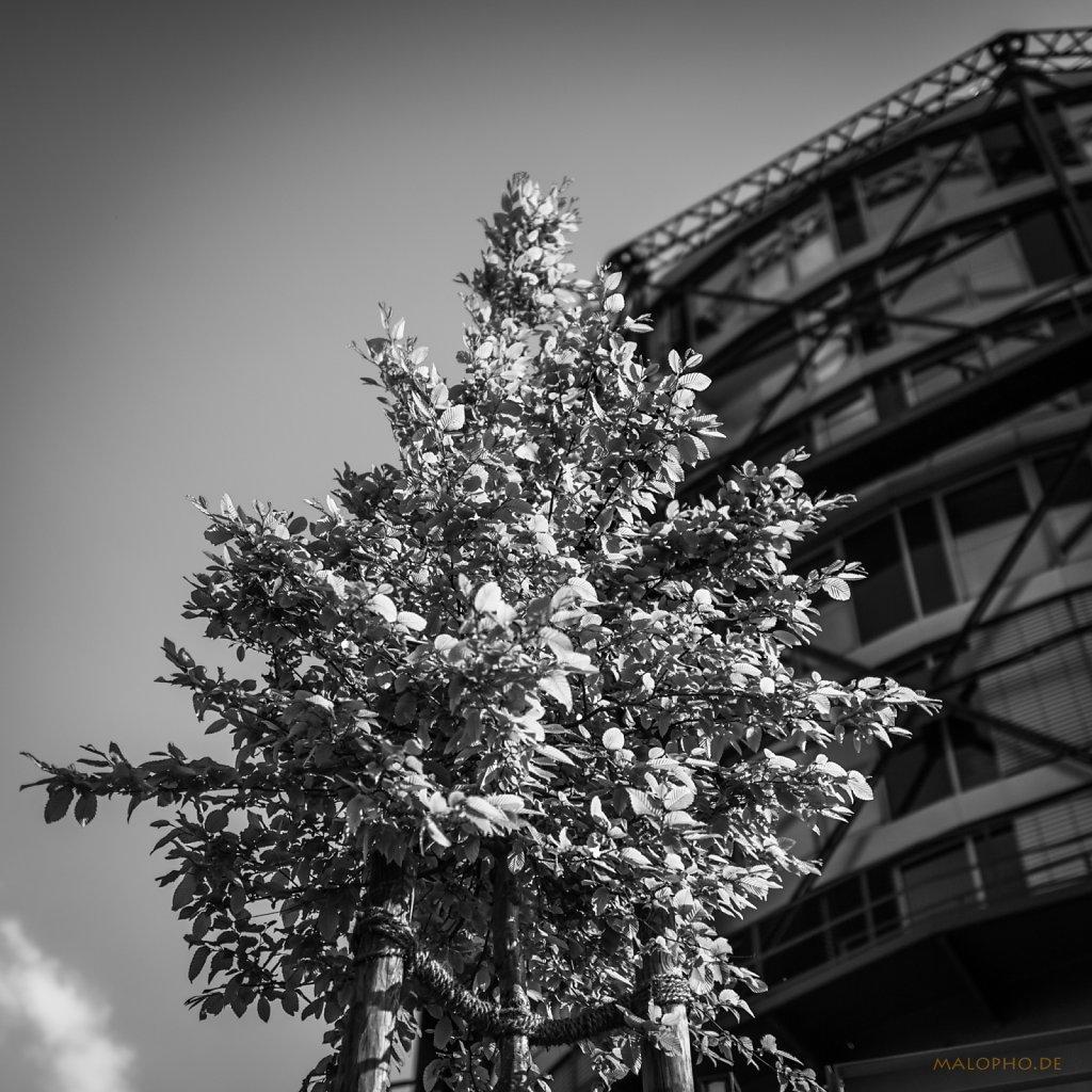 Gasometerbaum