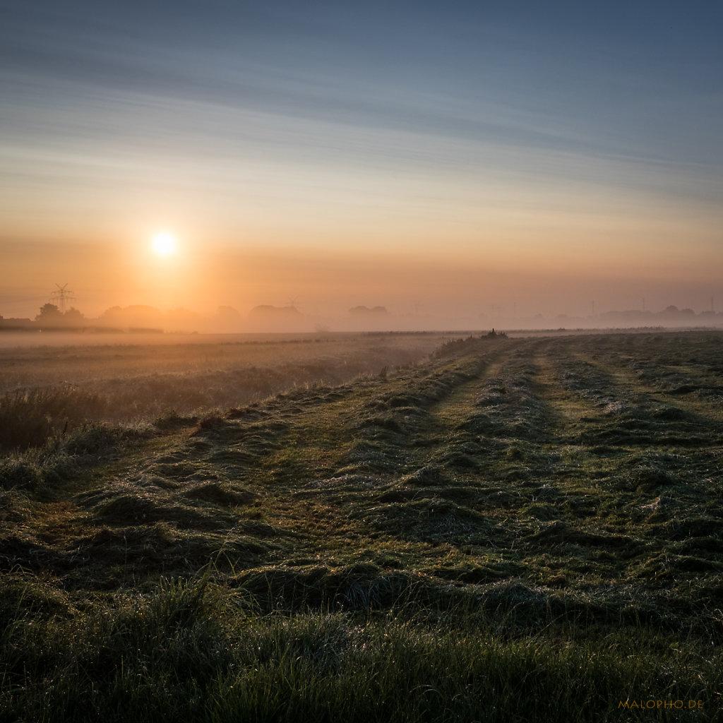 Morgennebel-1