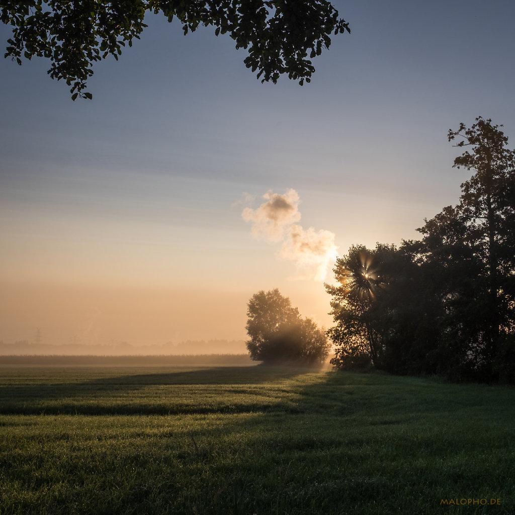 Morgennebel-6