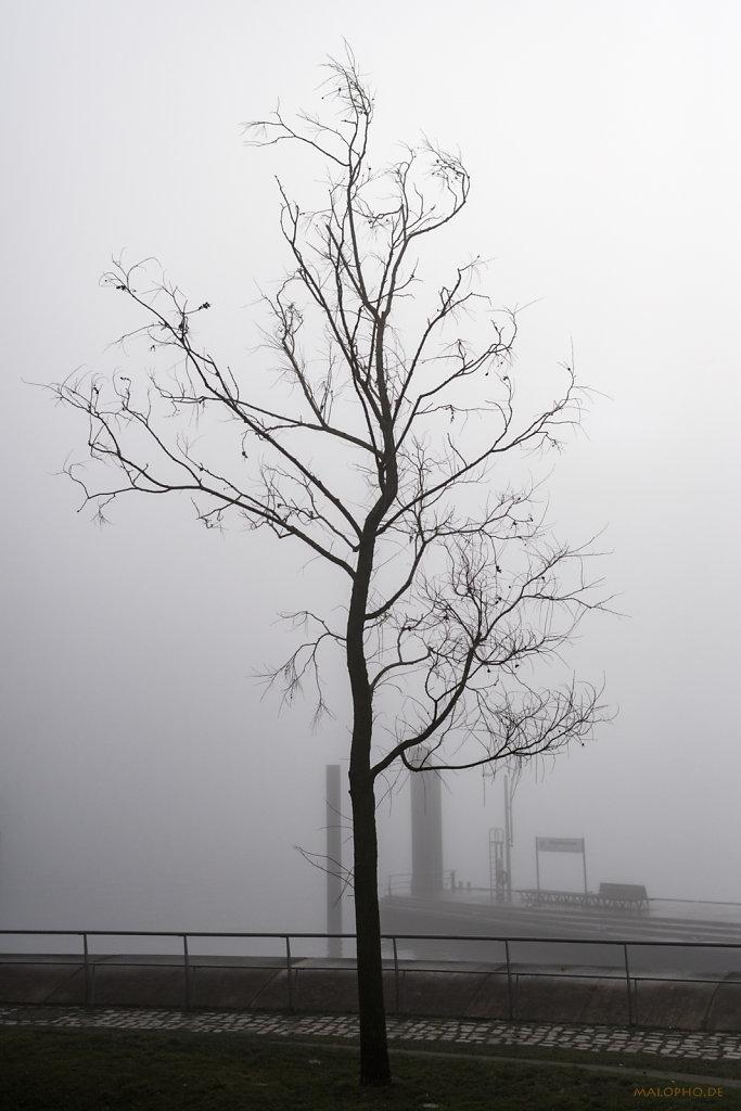 Dalmannkai Baum