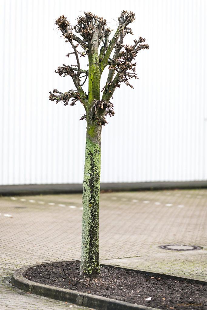 Parkplatzbaum