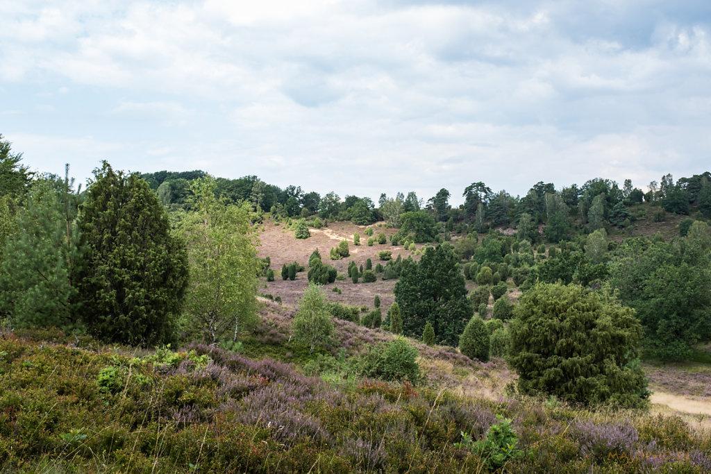 Lüneburger Heide 2019