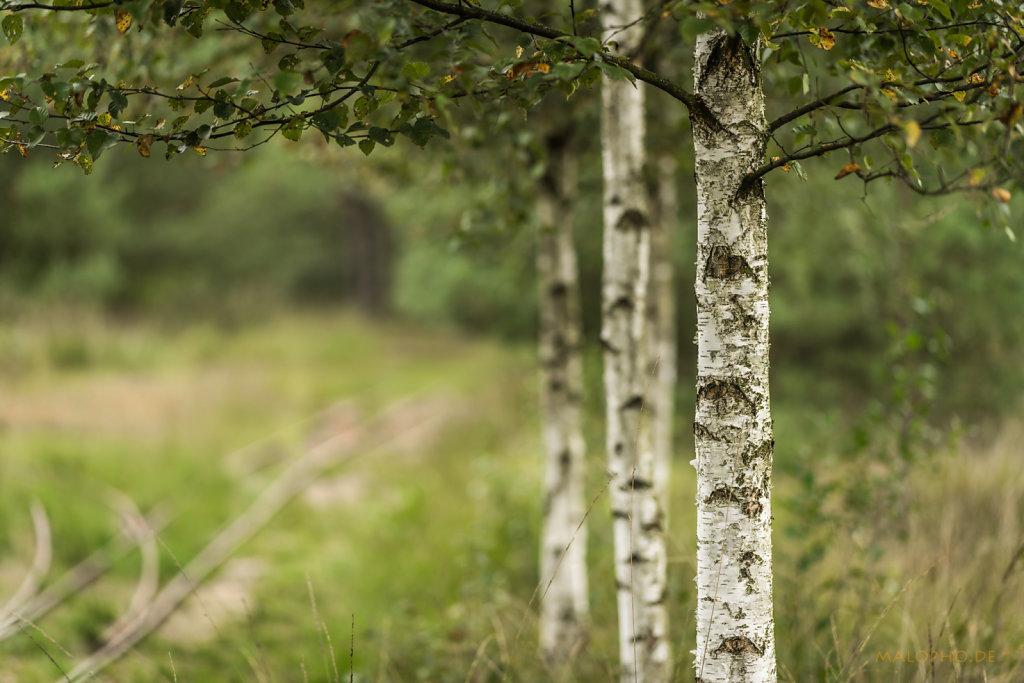 Tister Moor