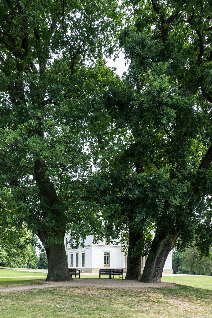 Haus hinter Bäumen-1
