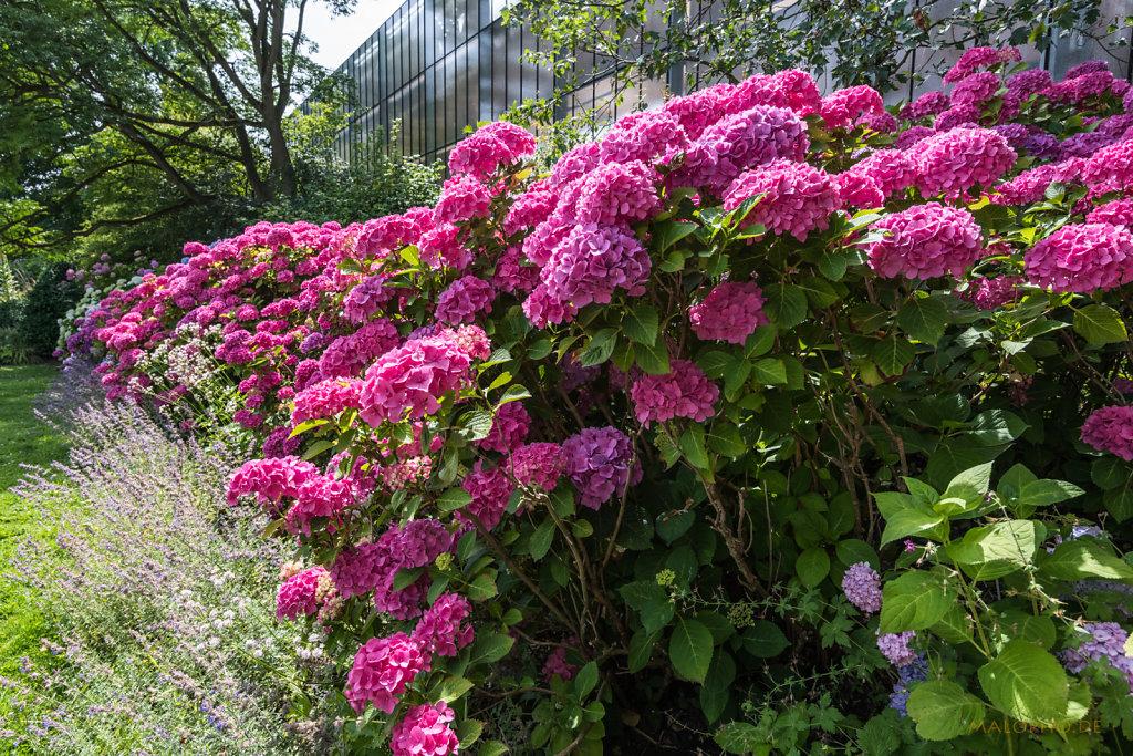 Blütenreihe