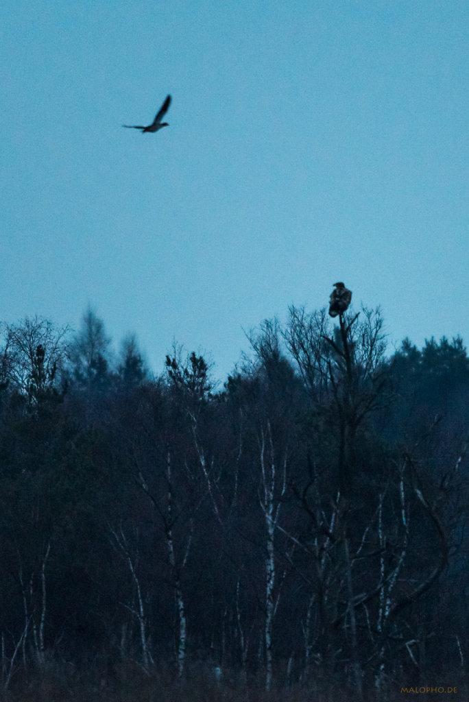 Adlerbeute
