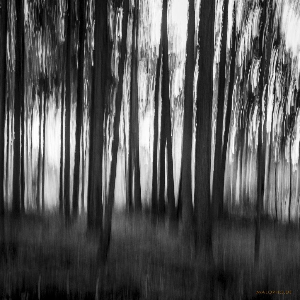 11 | 04 - Zug im Wald