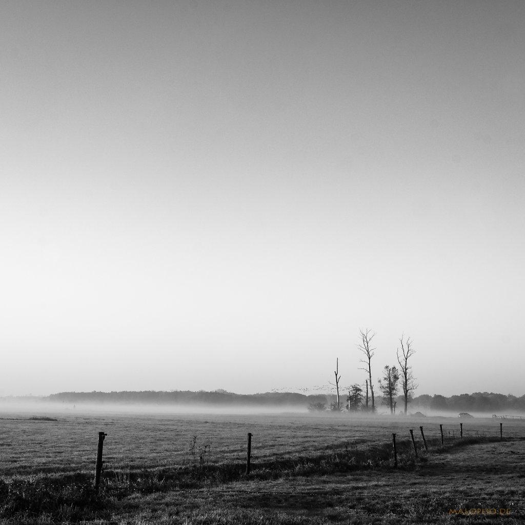 11 | 08 - Bäume im Nebel