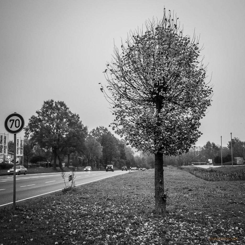 11 | 10 - Kleiner Straßenbaum