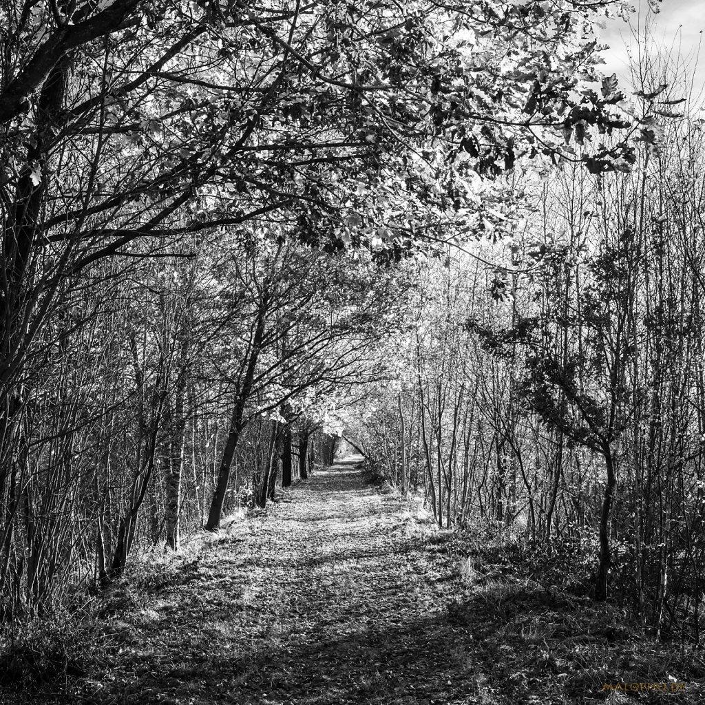 11 | 15 - Moorweg lang
