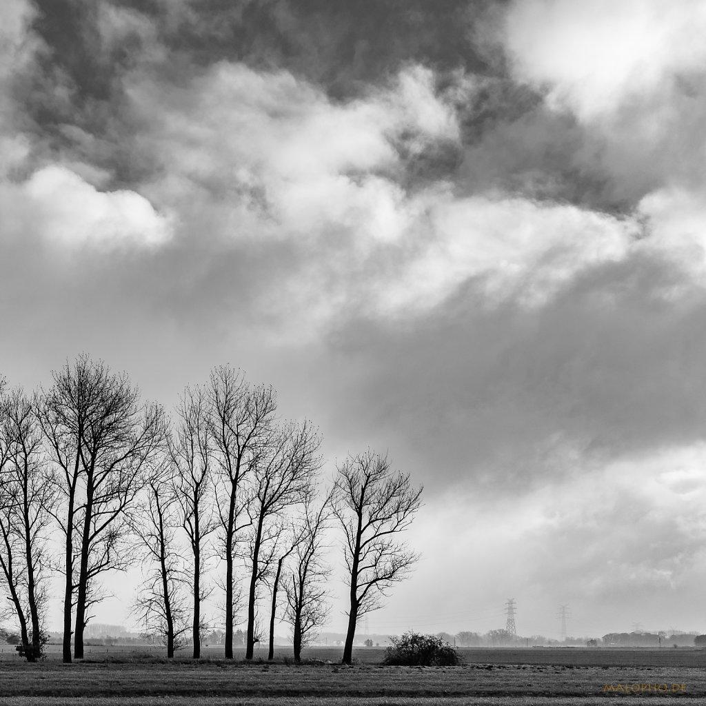 11   26 - Bäume unter Wolken