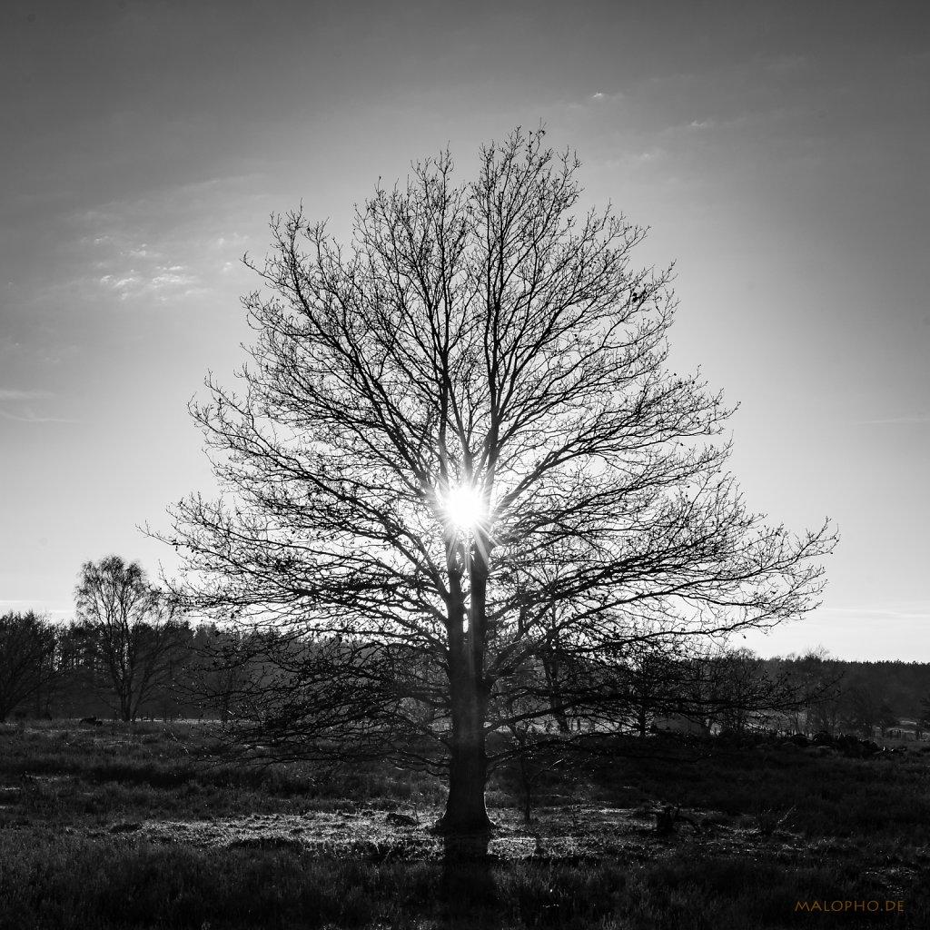 12 | 19 - Stern im Baum