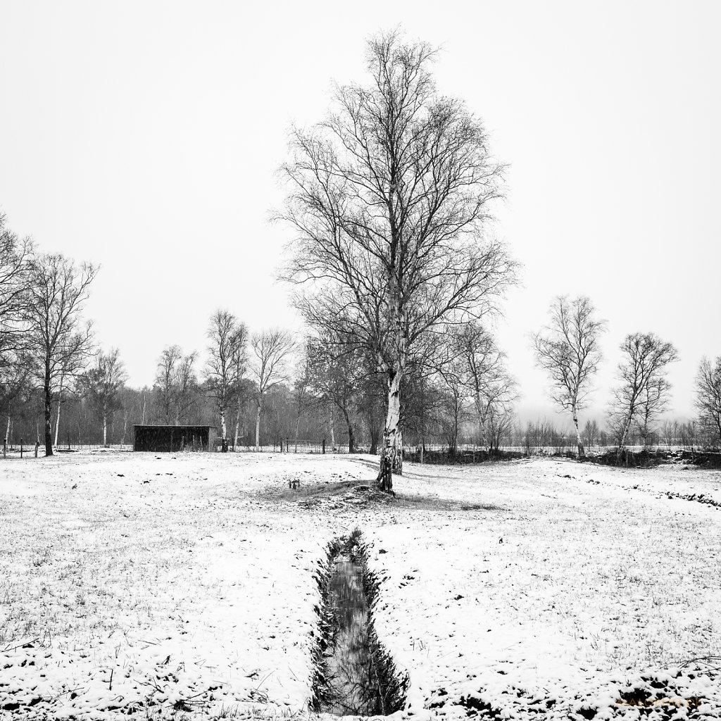 01 | 07 - Weide mit Schnee II