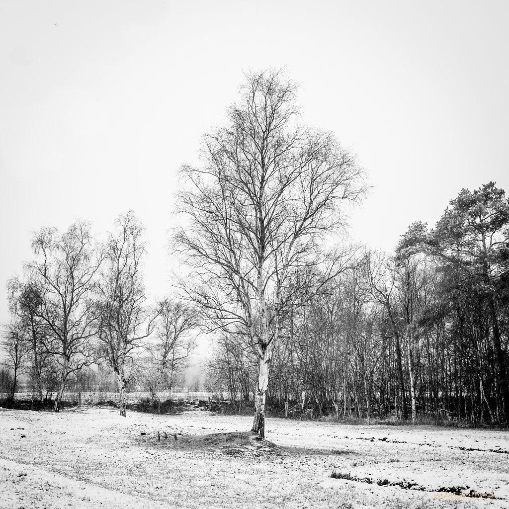 01 | 07 - Weide mit Schnee I