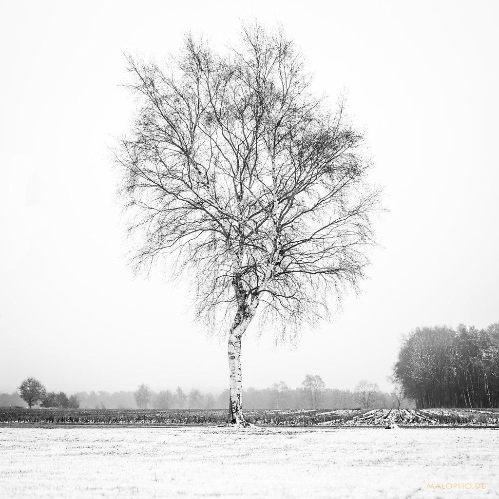 01 | 07 - Verschneiter Frust