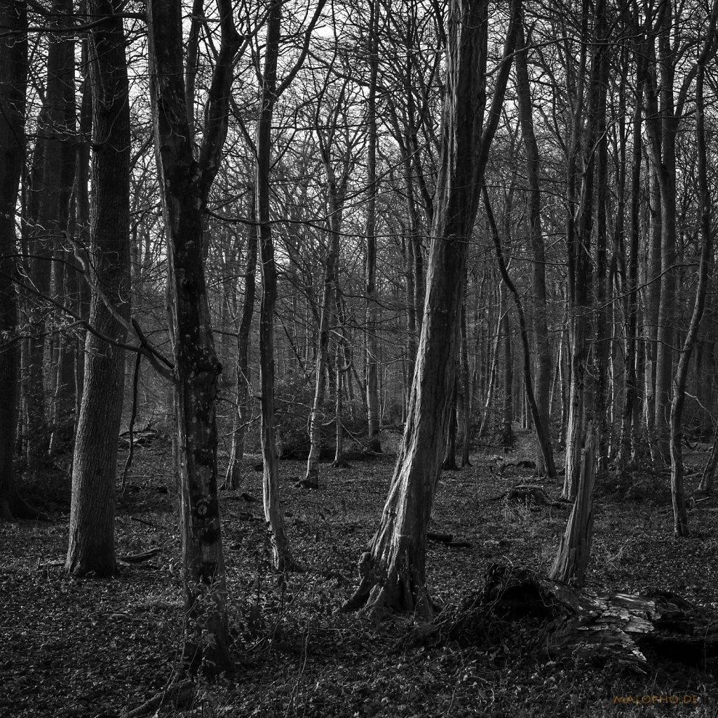 01 | 10 - Licht im Wald