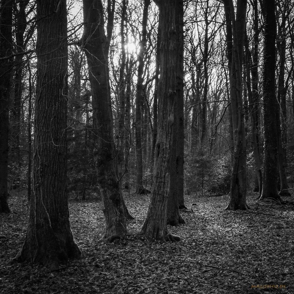 01 | 10 - Licht im Dunkel