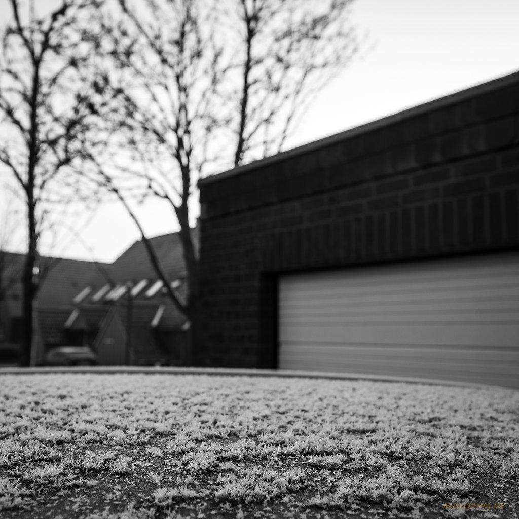 01 | 26 - HOLGA_Frost