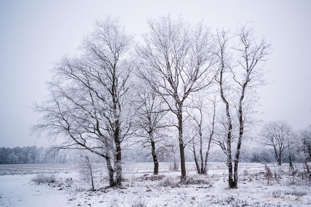 Barger Winter Januar 2021