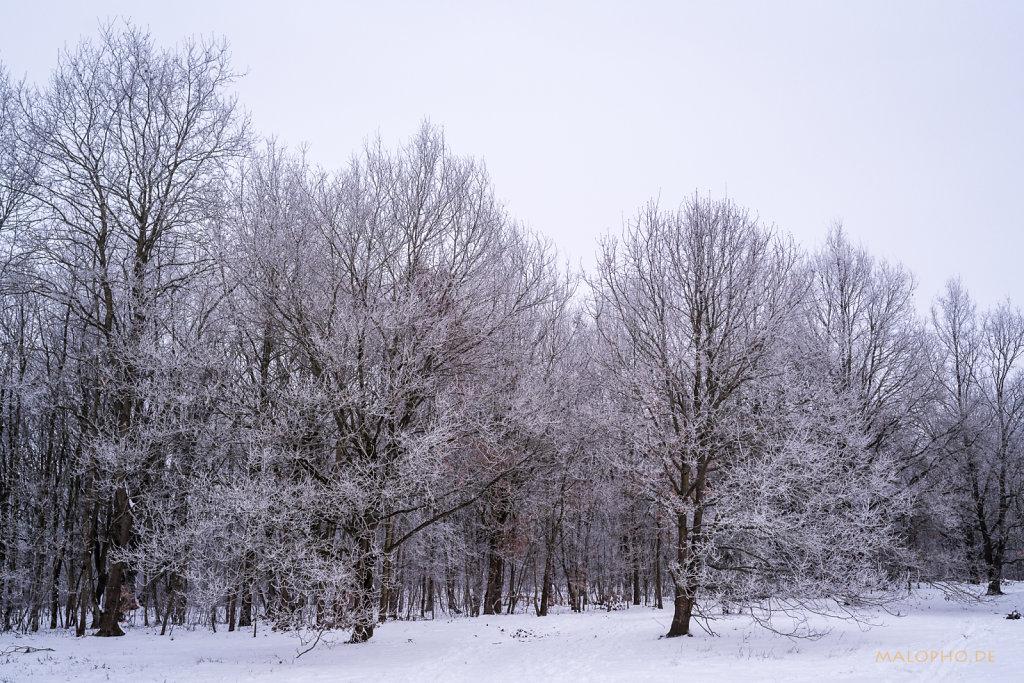 Begrenzungsbäume