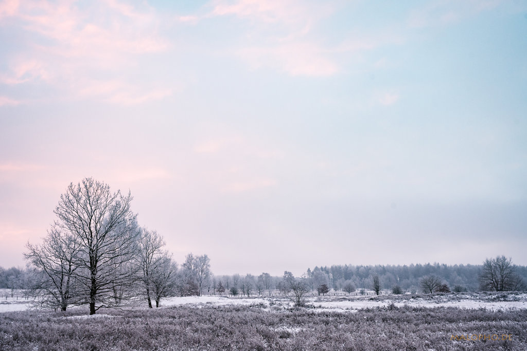 Heide am Morgen IV