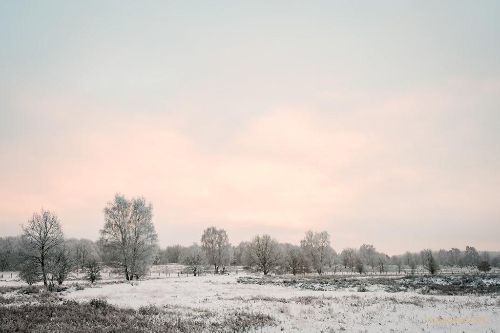 Heide am Morgen VII