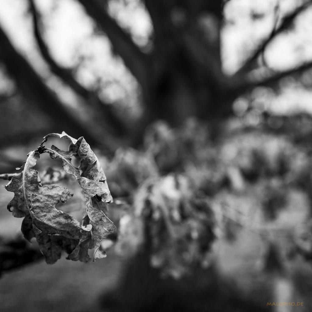 02 | 18 - Post-Herbst Laub