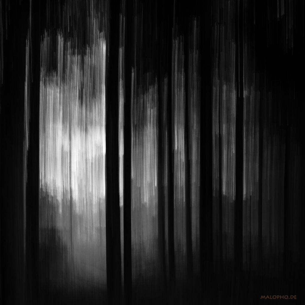 02 | 22 - Dunkler Wald