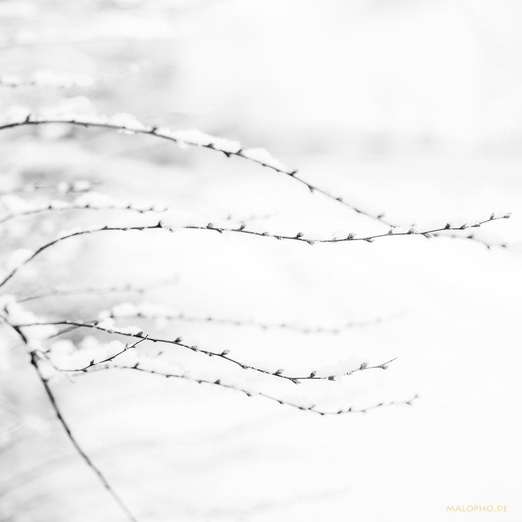 03   09 - Knospen im Schne