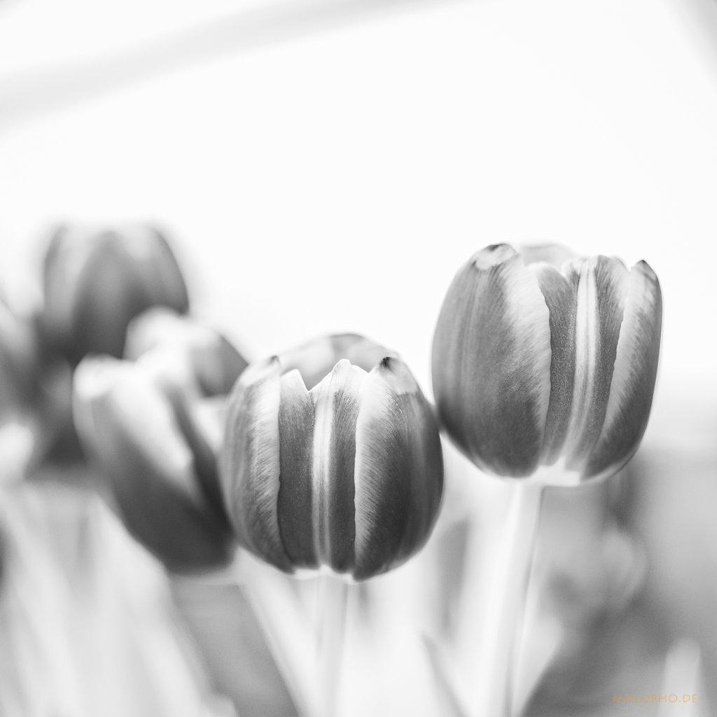 03 | 23 - Tulpenstrauß