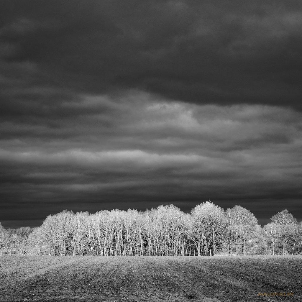 04 | 01 - Goldener Wald