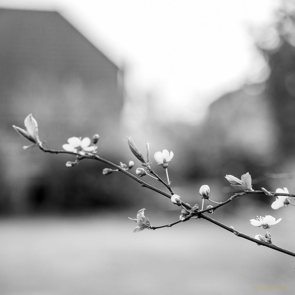 04 | 02 - Frühjahrsboten
