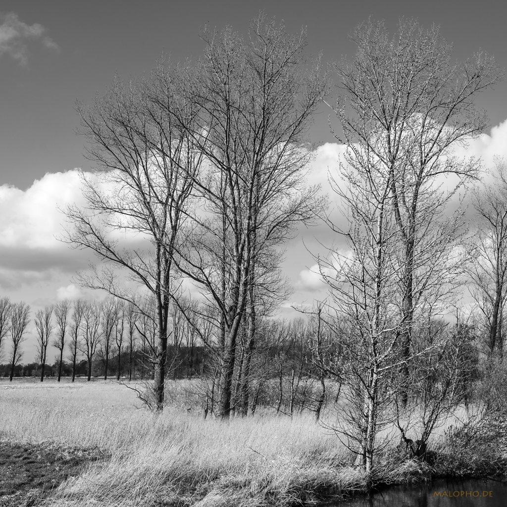 04 | 21 - Schwingebäume