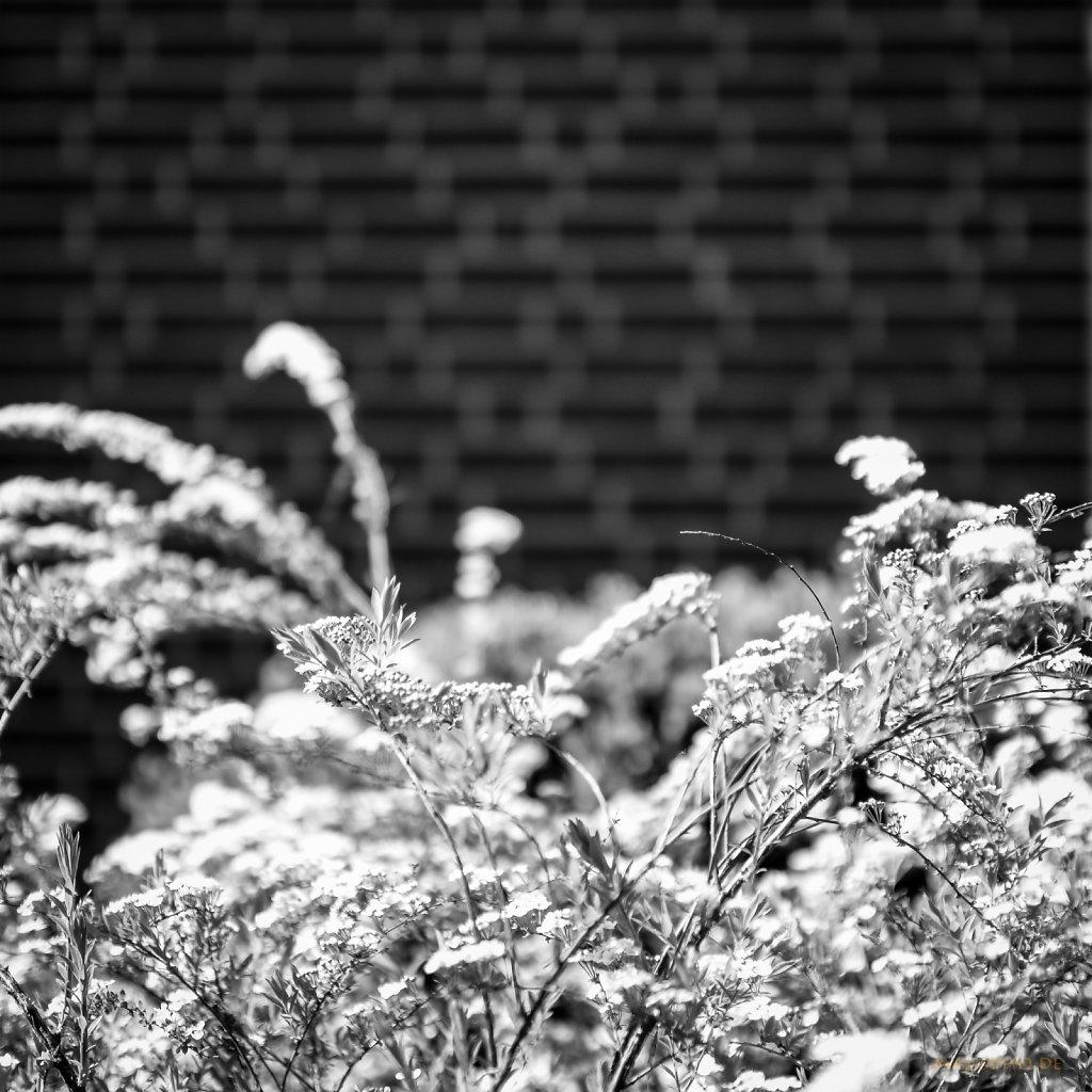 04 | 23 - Blütenrausch