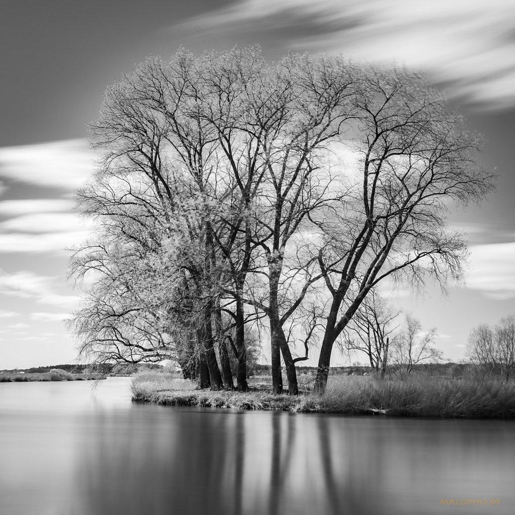 04 | 25 - Oste Uferbäume