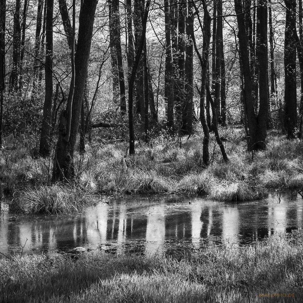 04 | 30 - Regenwald