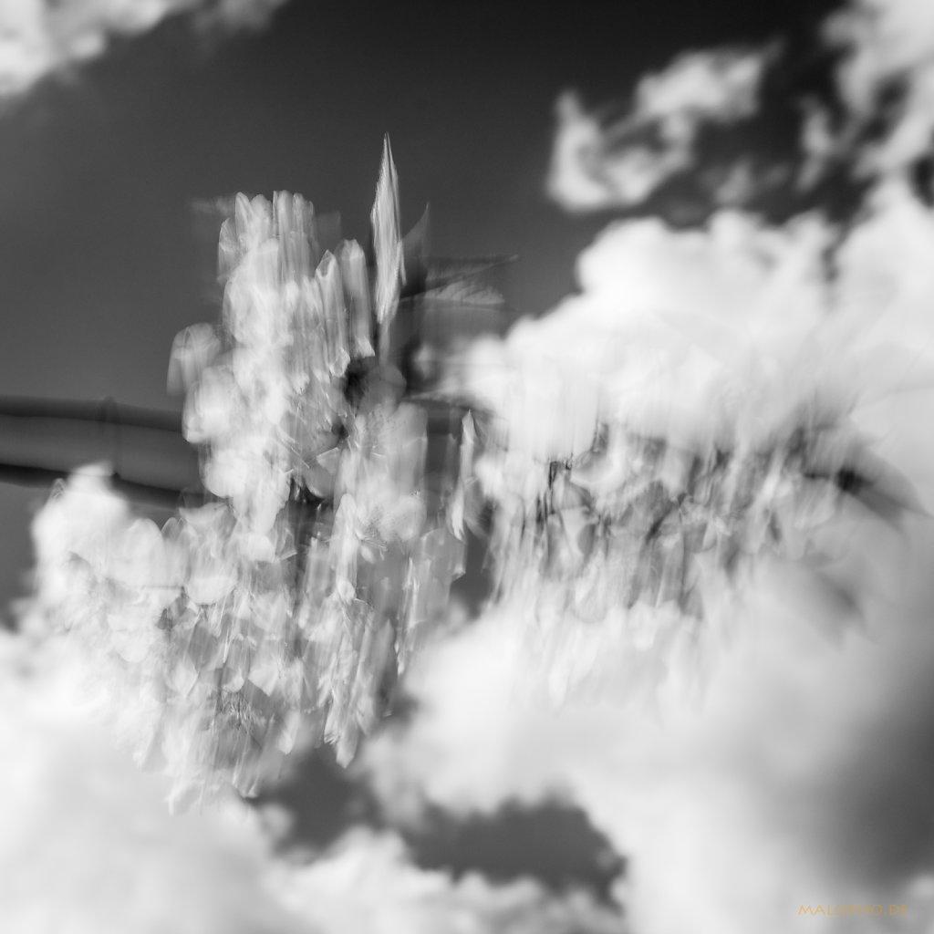 05 | 07 - Blütenwolken