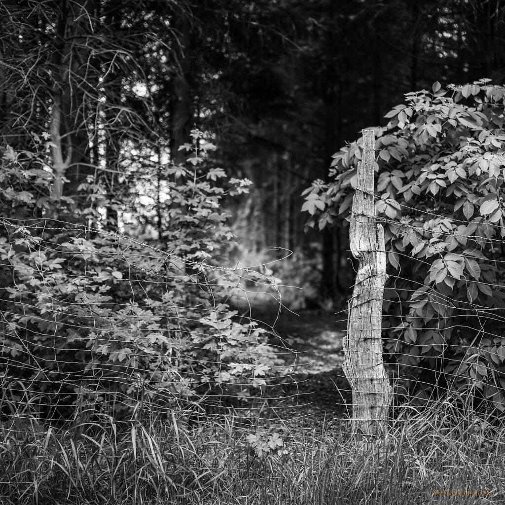 06 | 01 - Der Zaun