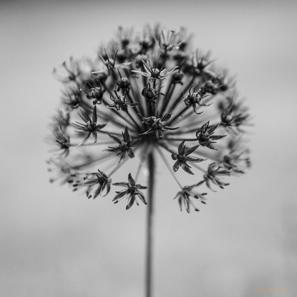 06   03 - Florale Skulptur