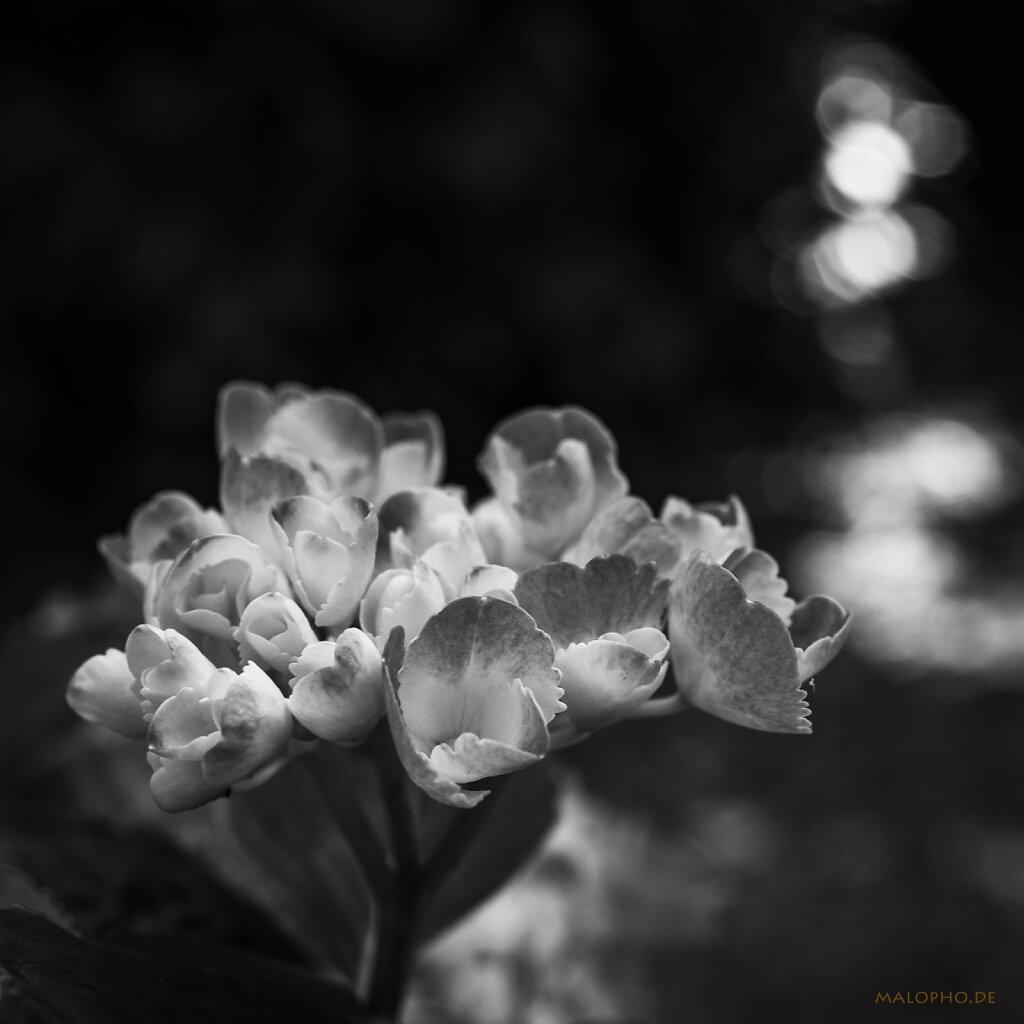 07   18 - Blumenstrauss
