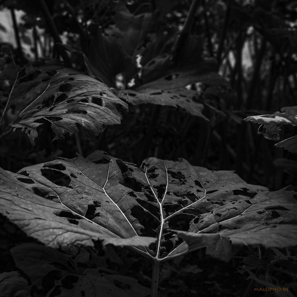 07   19 - Waldsuche