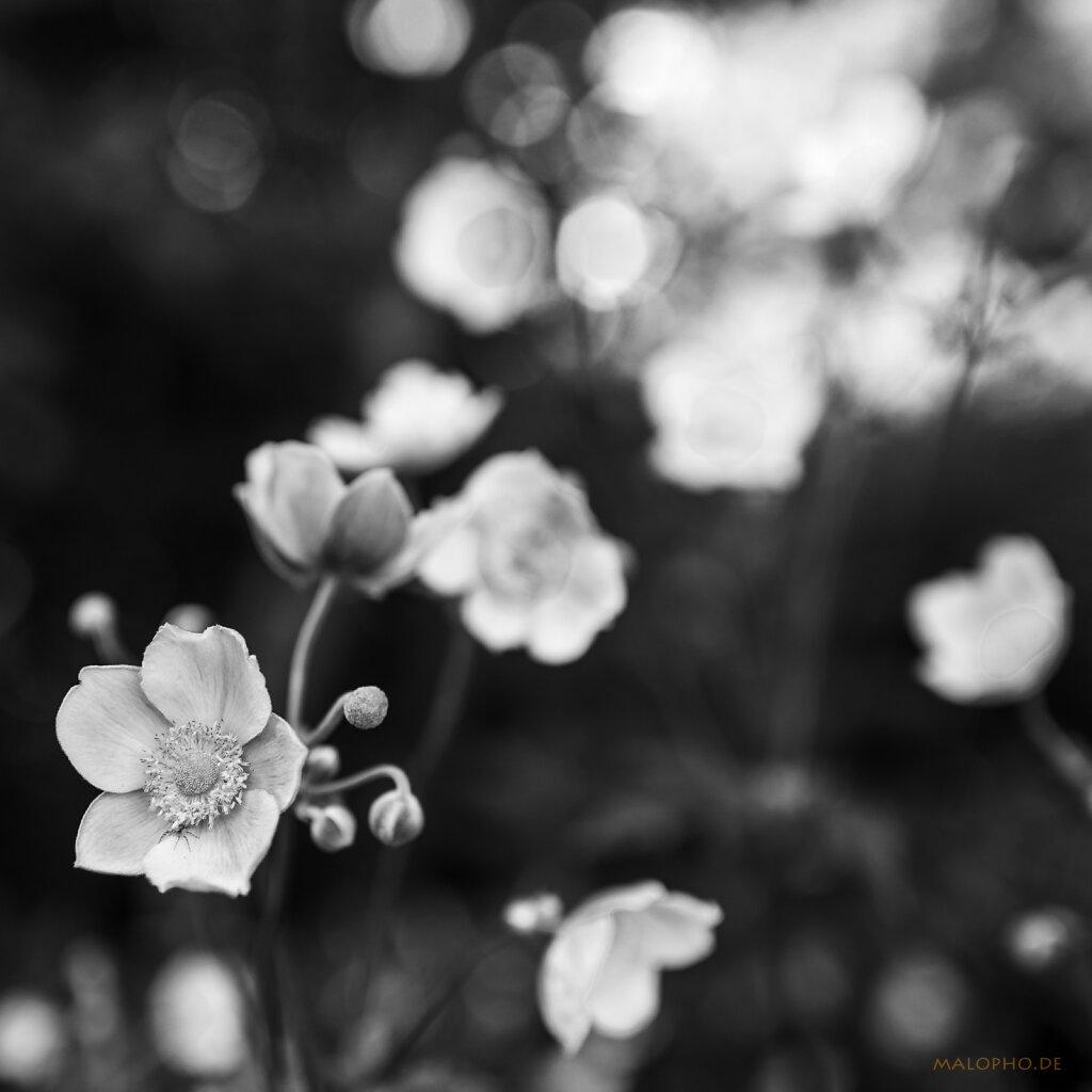 08 | 05 - Blütengruppe mit Licht