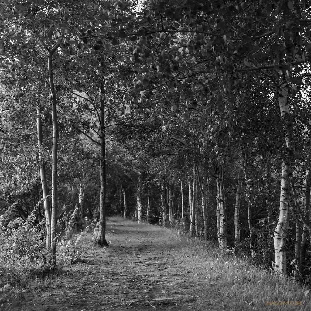 08 | 08 - Moorweg II